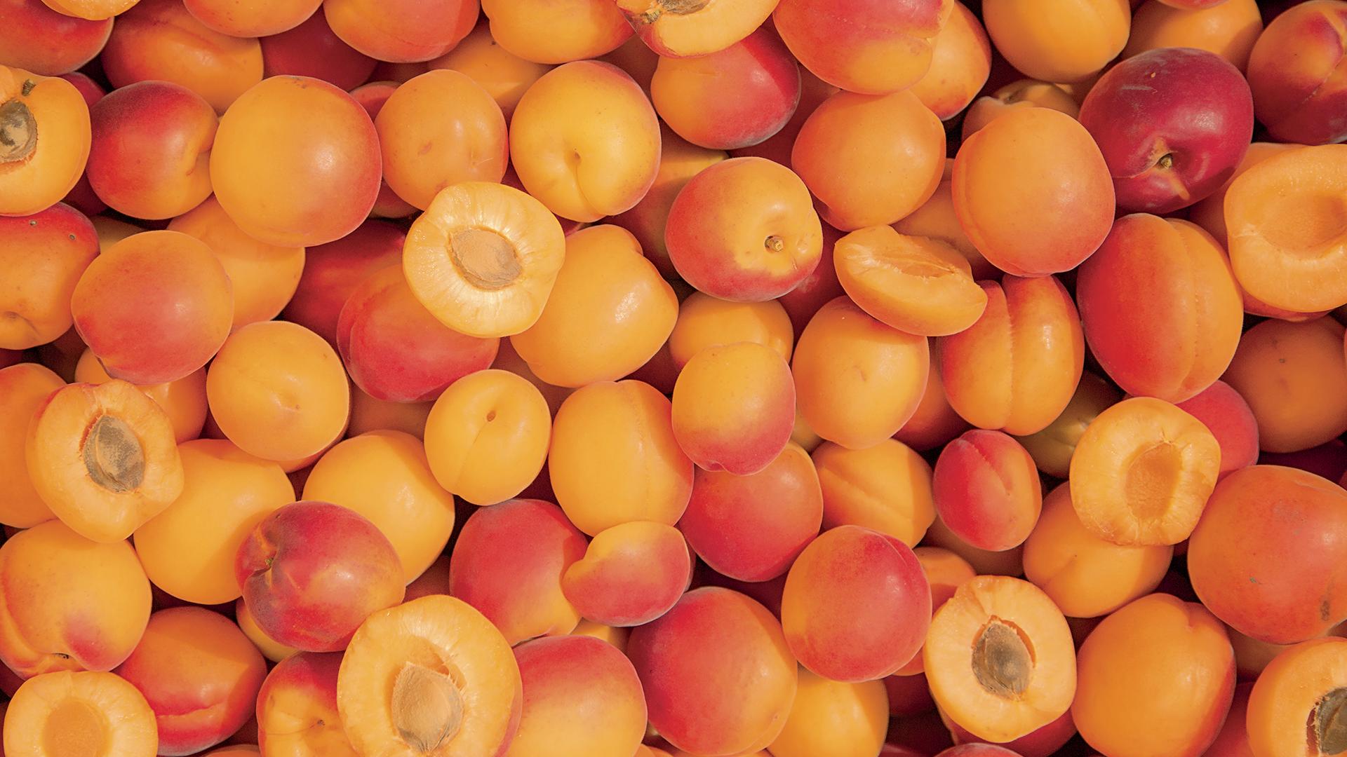 Abricot flavorcot et lido adamance