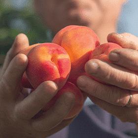 admance main abricot