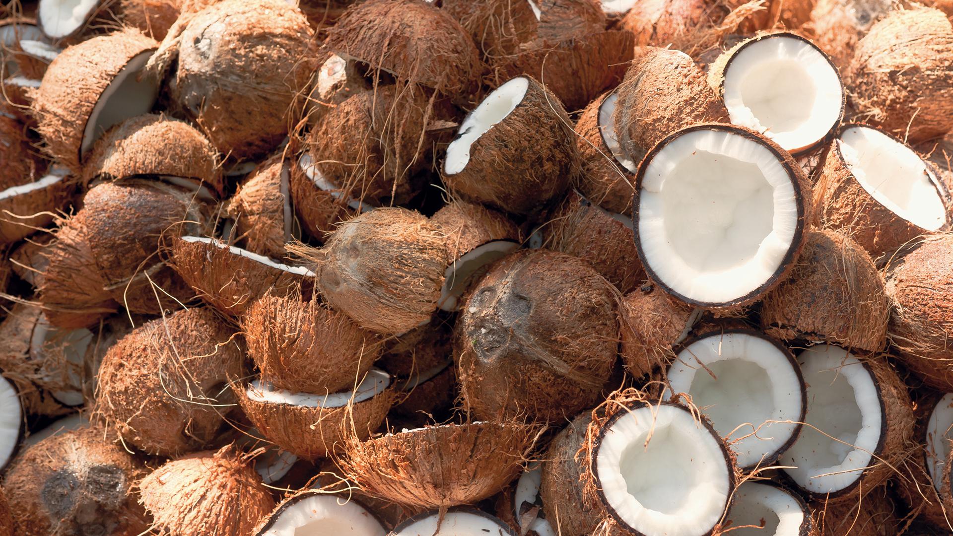 Noix de coco du sri lanka