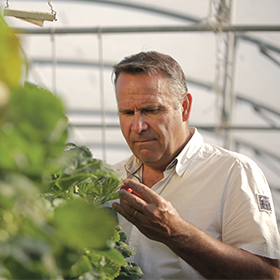 Franck Figuet producteur de fraises charlotte et magnum