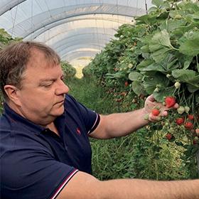 Patrick Marty producteur de fraise mara des bois