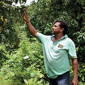 tushar chavan producteur de mangue
