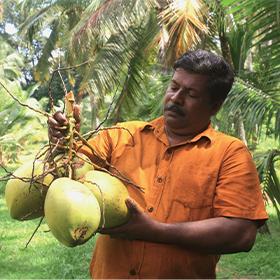 Keerthi Ranjith Ranwala producteur de noix de coco