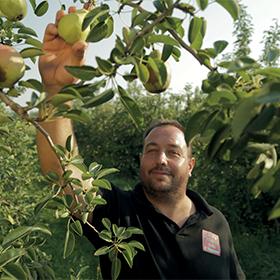 Nicolas Buard producteur de poire